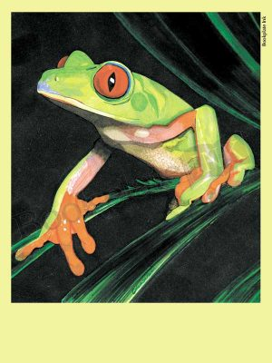 C103-tree-frog-bookplate