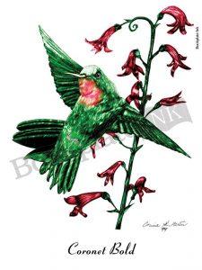 C105-Hummingbird-and-flower-bookplate