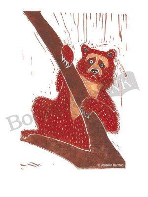 JB03-Ucumari-spectacled--bear-Jennifer-Berman-bookplate